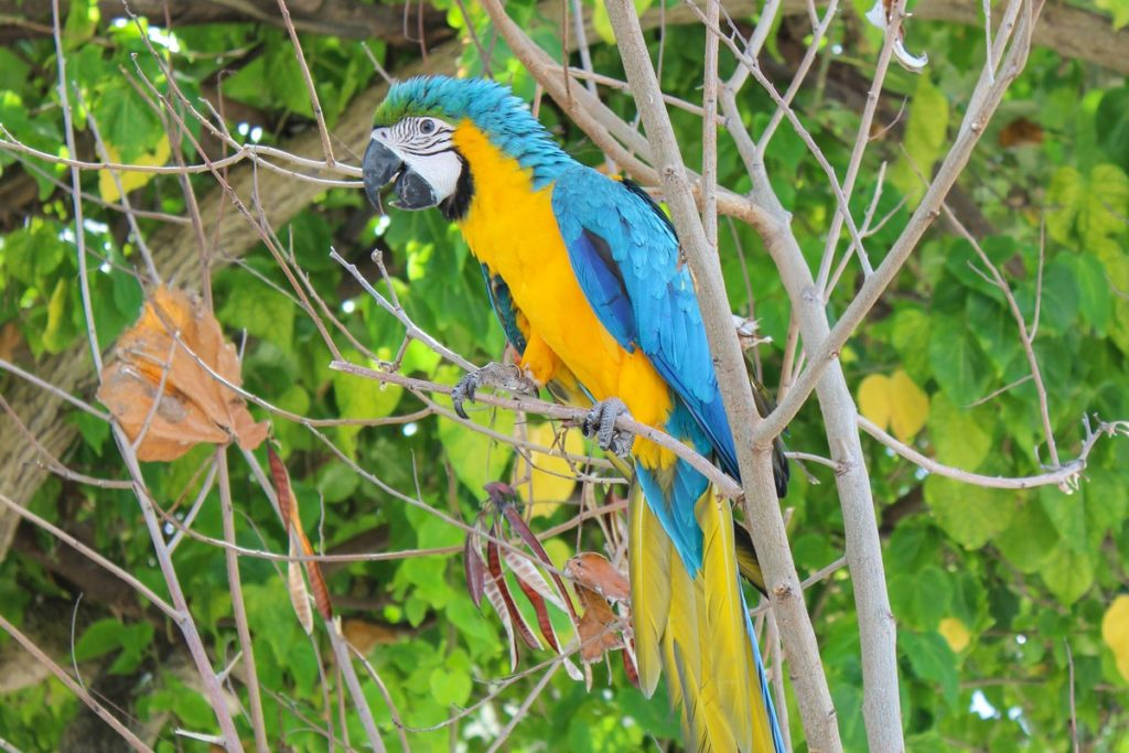 Papegaai op de Malediven