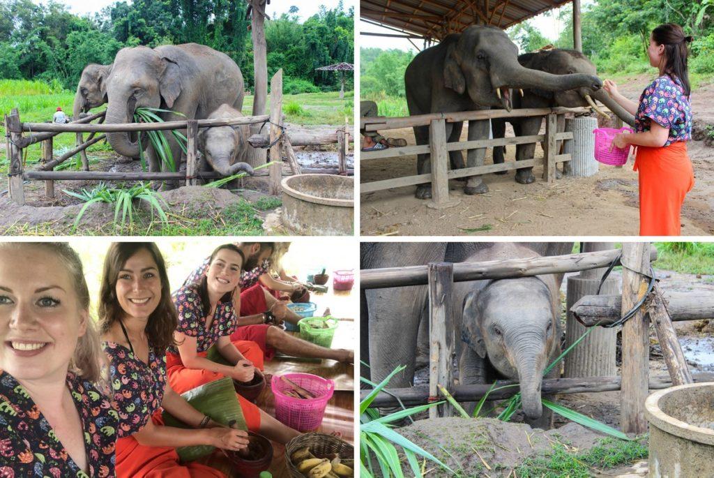 Dag 5: Olifanten opvang in Chiang Mai