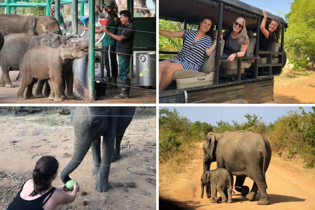 Op safari in Udawalawe National Park