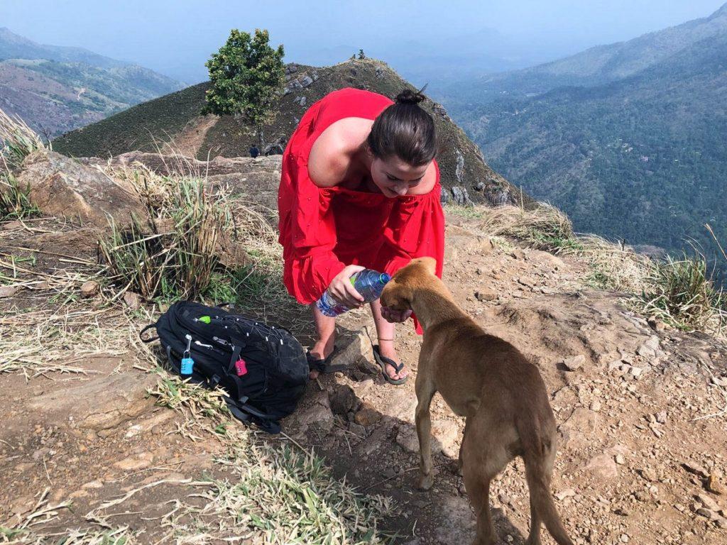 Hondjes water geven bij Little Adam's Peak
