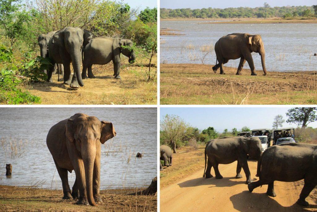 Olifanten in Udawalawe National Park