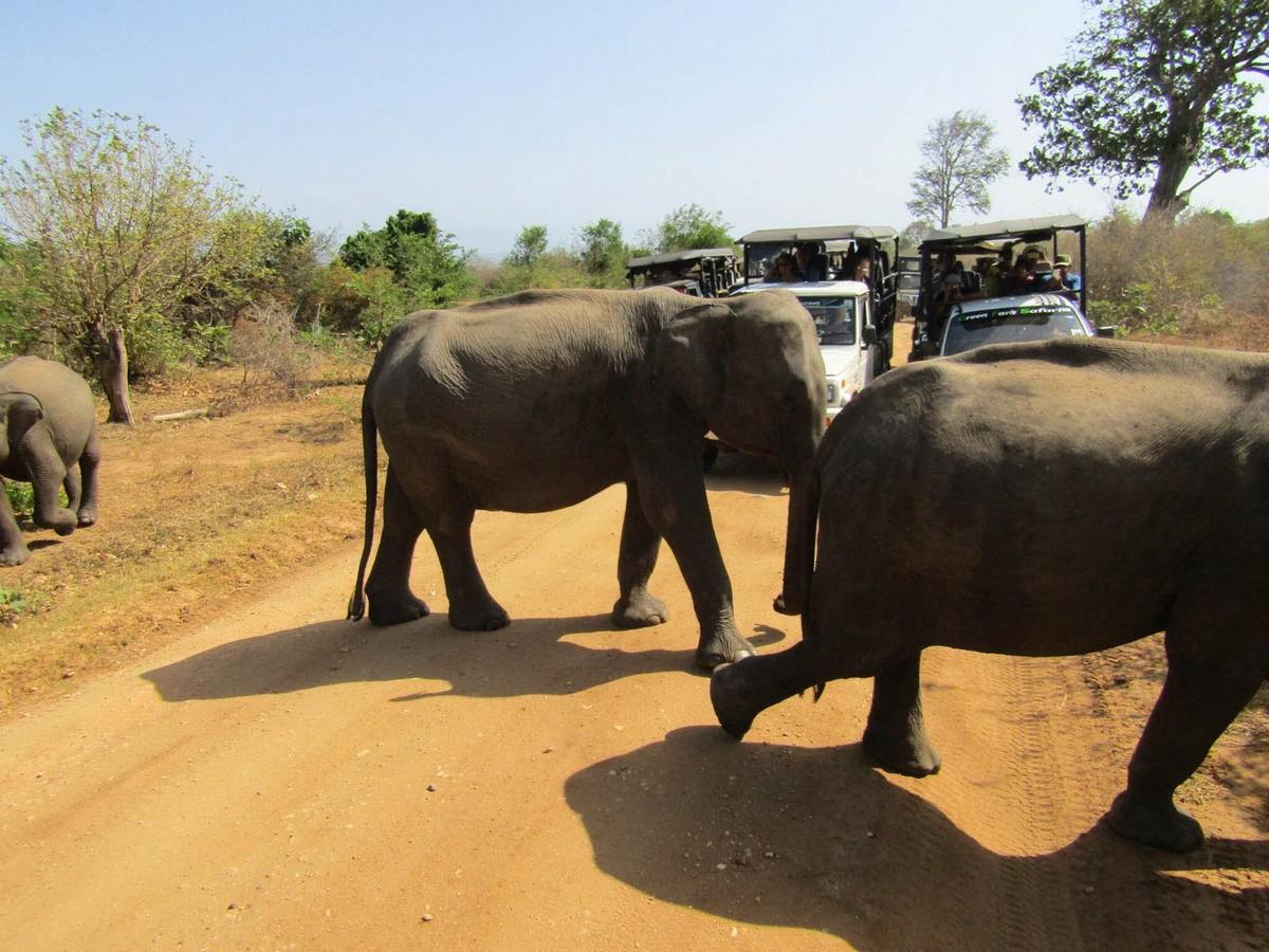 Olifanten spotten in Sri Lanka: op safari door Udawalawe National Park!